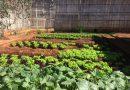 CASA Sertãozinho doa hortaliças para lar de idosos